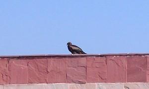 guesthousehawk